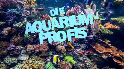 Aquarium-Profis-Landscape
